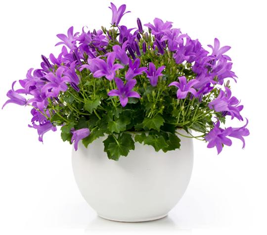 piante da bagno: come sceglierle in base all'esigenza - ideagroup blog - Luce In Bagno Come Sceglierla