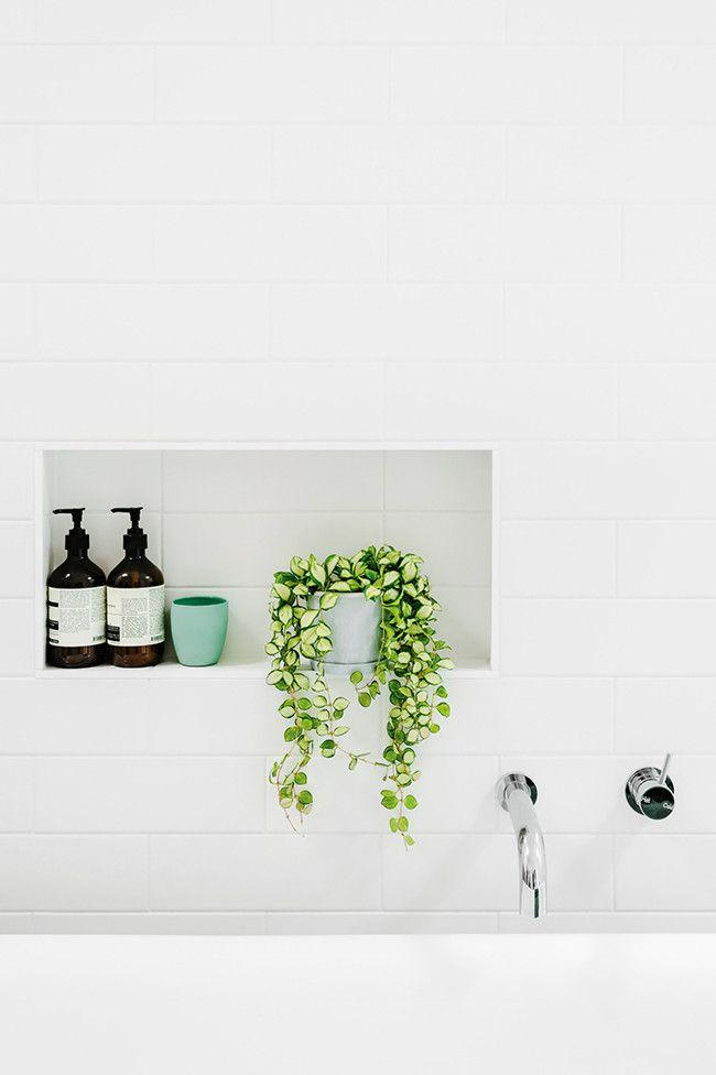 Piante da bagno come sceglierle in base all 39 esigenza ideagroup blog - Pianta bagno piccolo ...