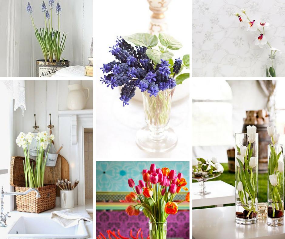 Piante bagno fiori idee per il design della casa - Piante da bagno ...