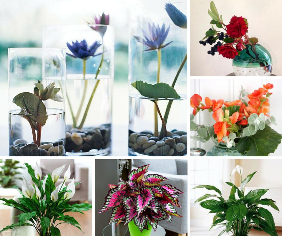 Fiori per arredare il bagno spatafillo e begonia for Arredare con i fiori